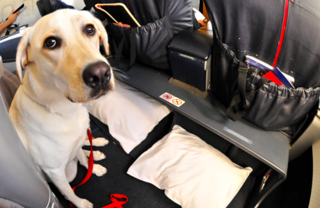 Hond in het vliegtuig