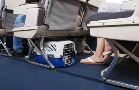 Hond in transportkist op vliegtuig