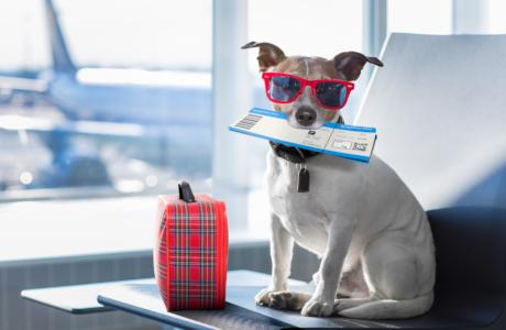 Hond op de luchthaven met vliegticket